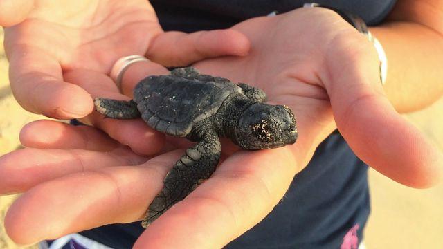 boa vista baby schildpad